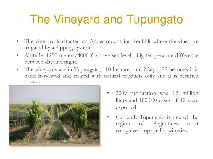 The Vineyard and Tupungato