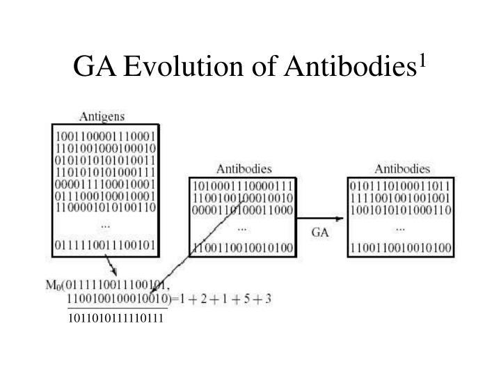 GA Evolution of Antibodies
