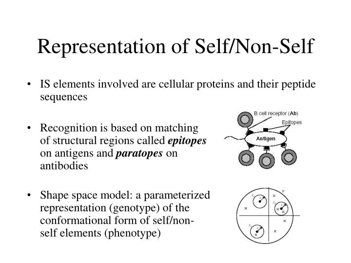 Recognition is based on matching of structural regions called
