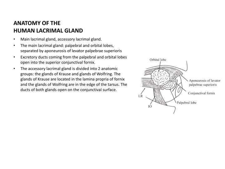Ppt Tear Film Lacrimal And Meibomian Glands Powerpoint