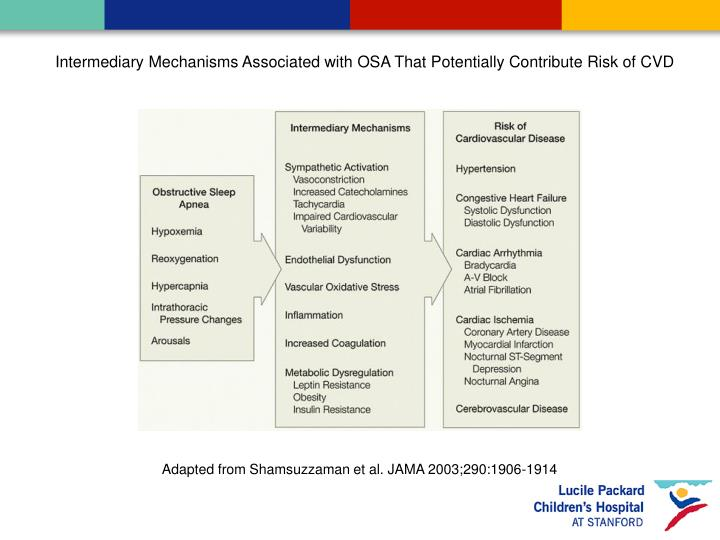 Intermediary Mechanisms Associated with OSA That Potentially Contribute Risk of CVD
