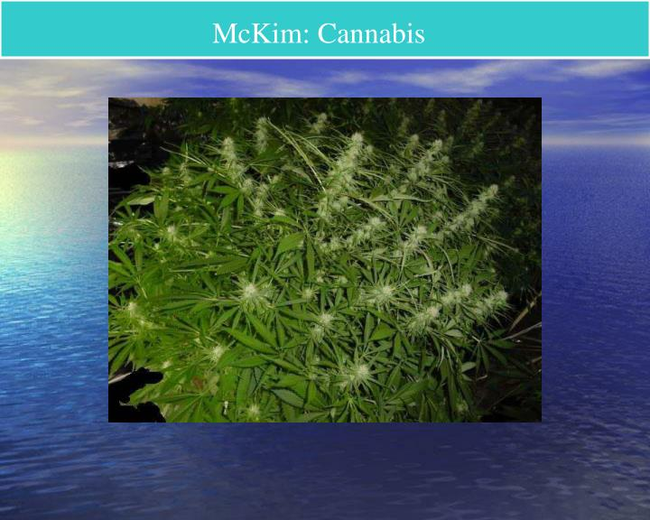 McKim: Cannabis