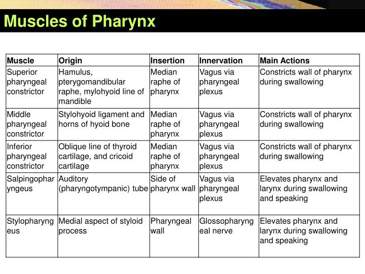 Muscles of Pharynx