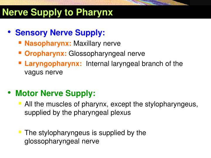 Nerve Sup