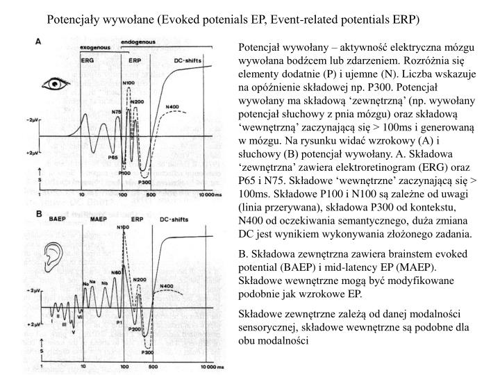 Potencja y wywo ane evoked potenials ep event related potentials erp