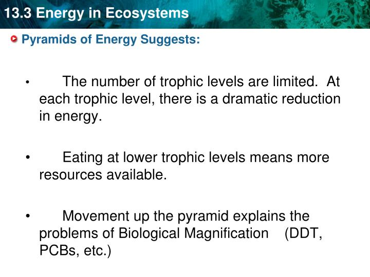 Pyramids of Energy Suggests: