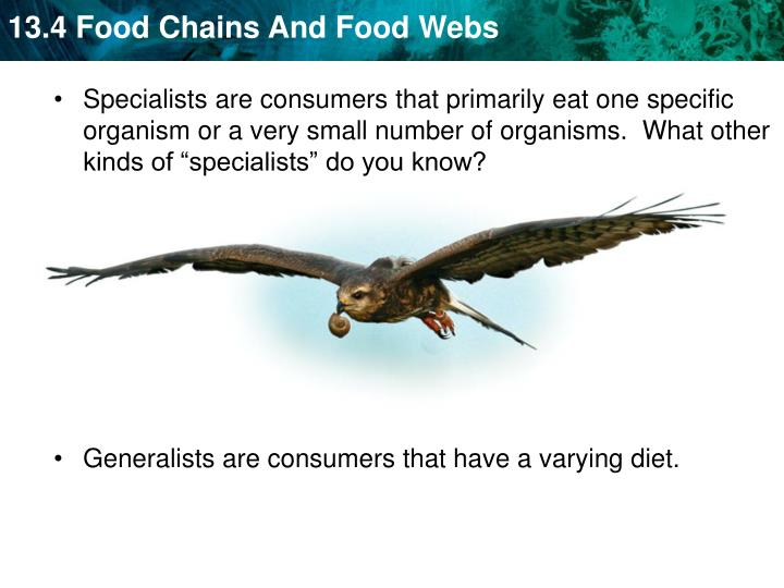 """Specialists are consumers that primarily eat one specific organism or a very small number of organisms.  What other kinds of """"specialists"""" do you know?"""