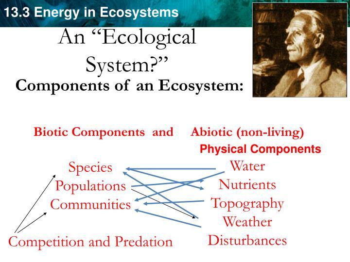 "An ""Ecological"