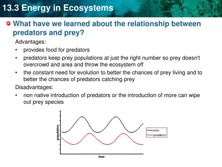 What have we learned about the relationship between predators and prey