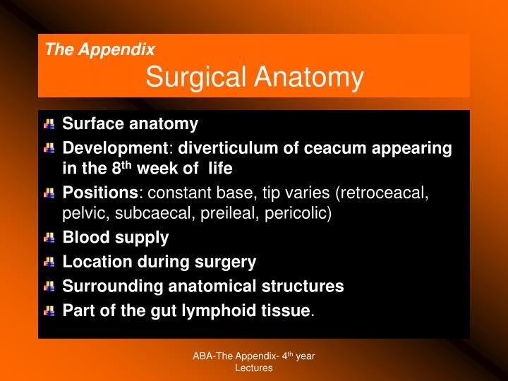 The Appendix