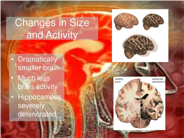 Changes in Size and Activity