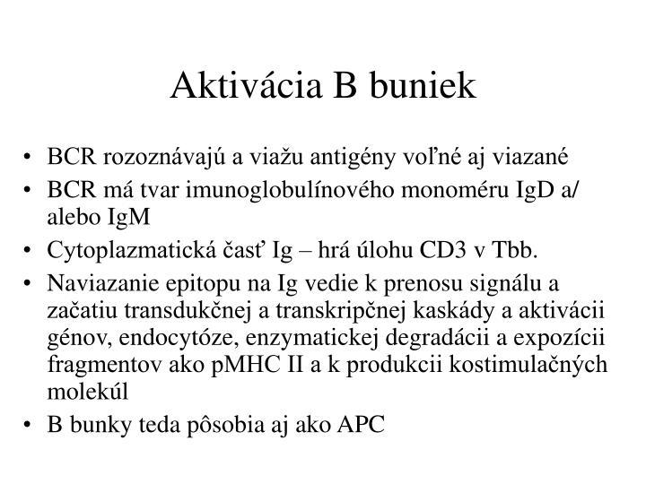 Aktivácia B buniek