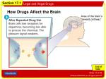 how drugs affect the brain2