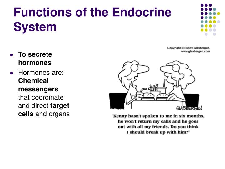 PPT - Endocrine System PowerPoint Presentation - ID:6127776