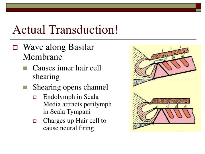 Actual Transduction!