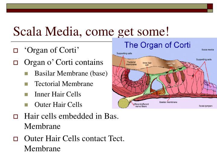 Scala Media, come get some!