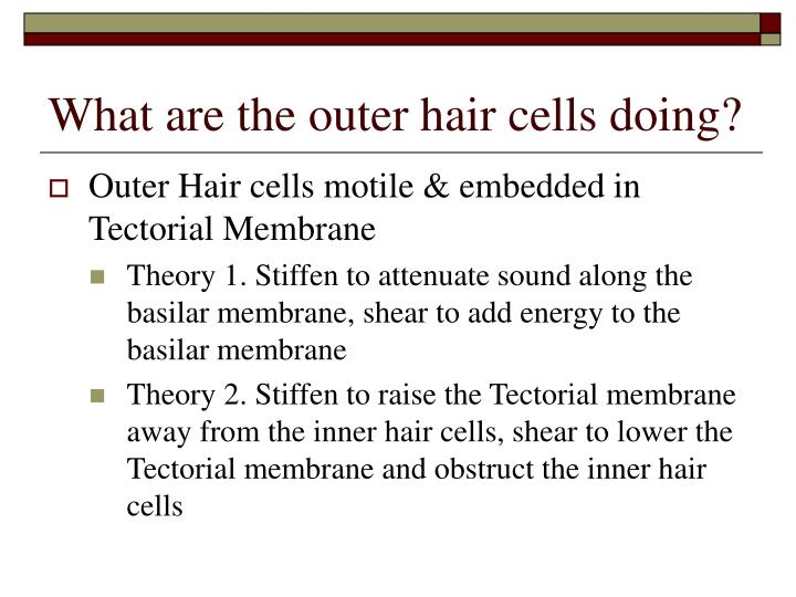 What are the outer hair cells doing?