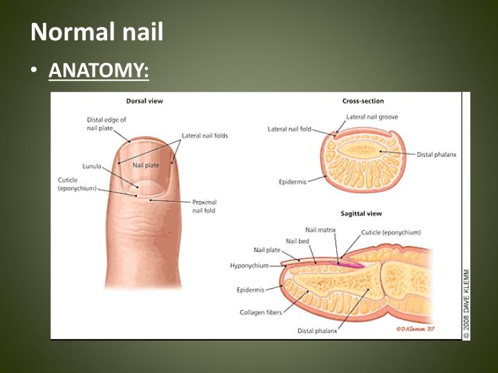 Normal nail