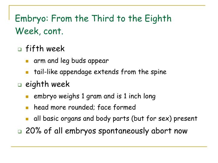 Embryo: From the Third to the Eighth Week, cont.
