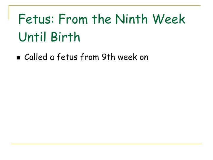 Fetus: From the Ninth Week Until Birth
