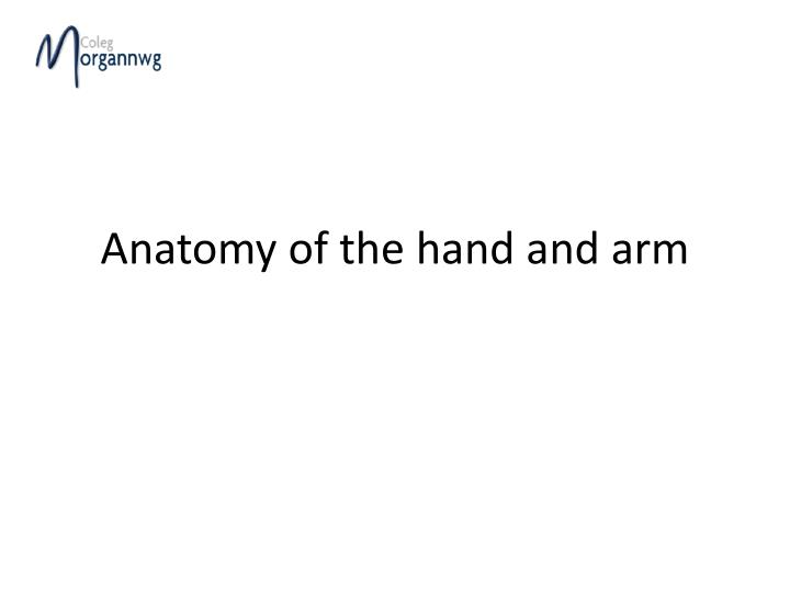 anatomy of the hand and arm n.