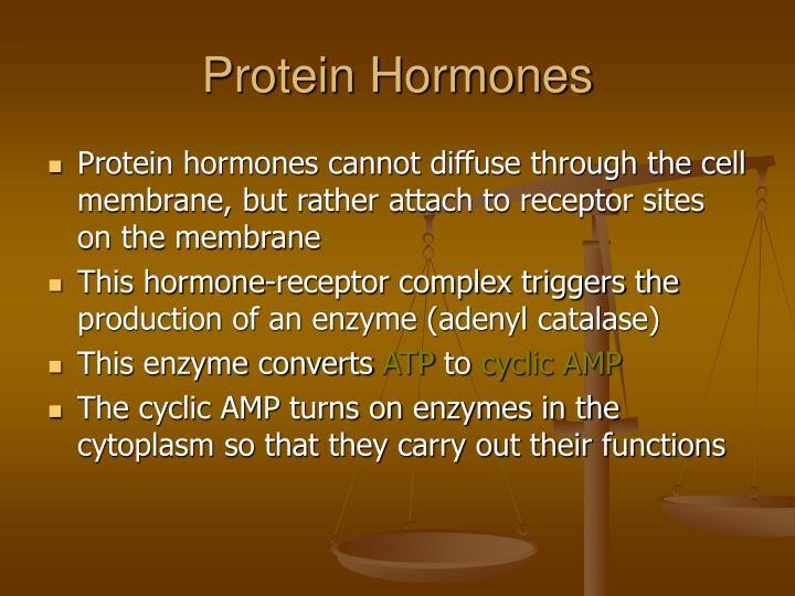Protein Hormones