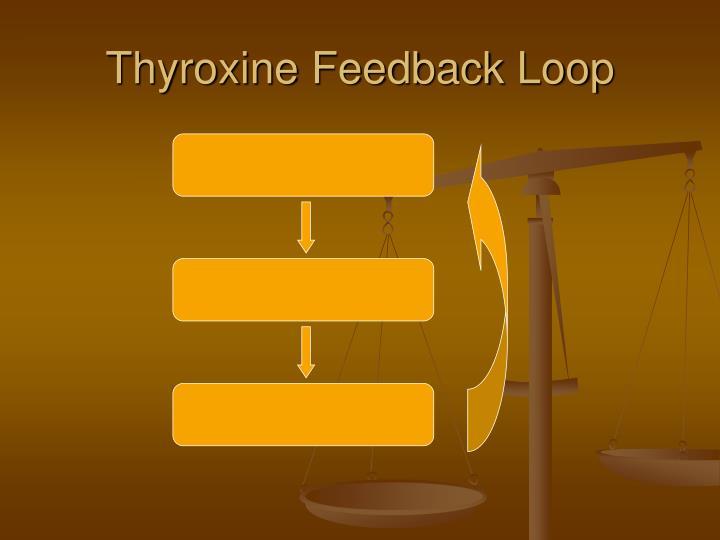 Thyroxine Feedback Loop