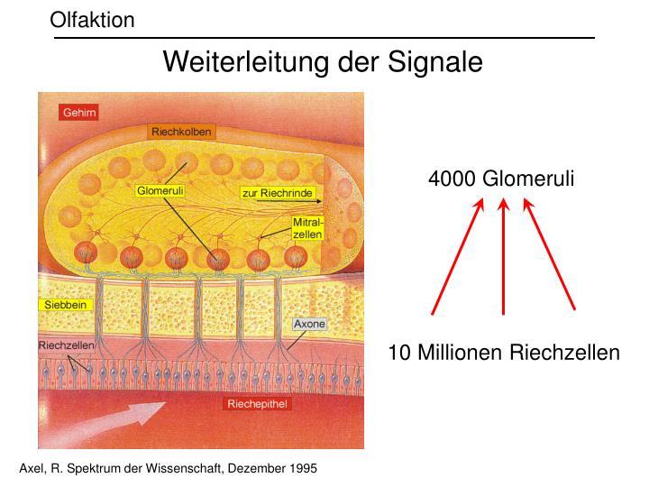 Weiterleitung der Signale