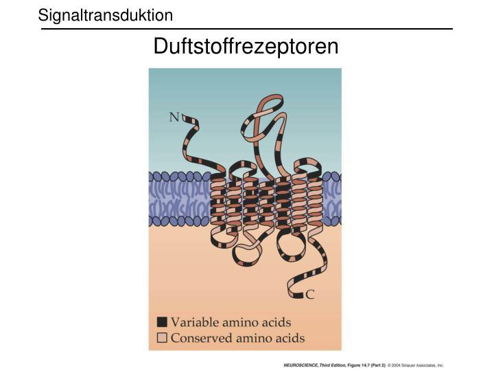 Duftstoffrezeptoren