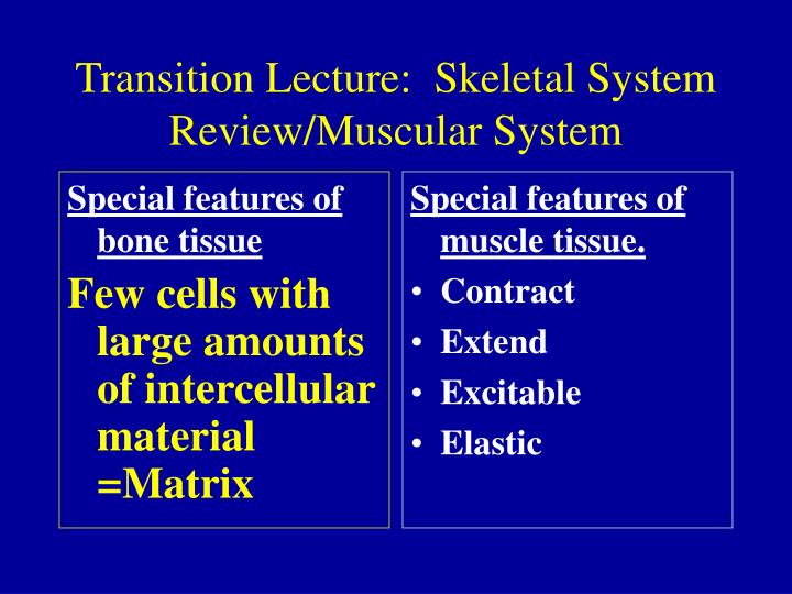 transition lecture skeletal system review muscular system n.