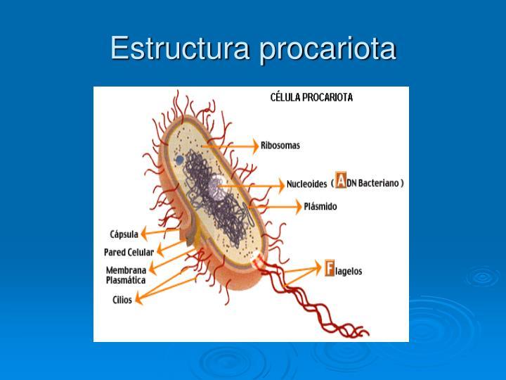 Estructura procariota