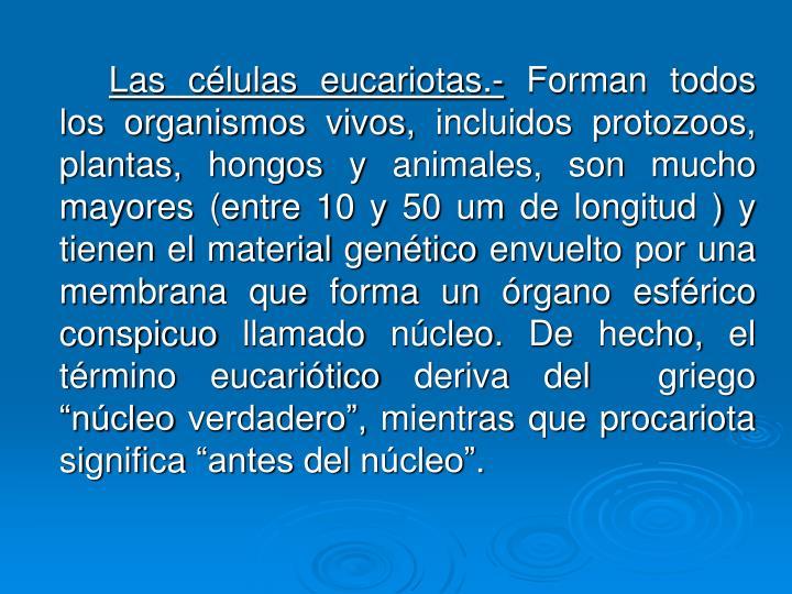 Las células eucariotas.-