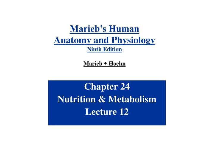 PPT - Chapter 24 Nutrition & Metabolism Lecture 12 PowerPoint ...