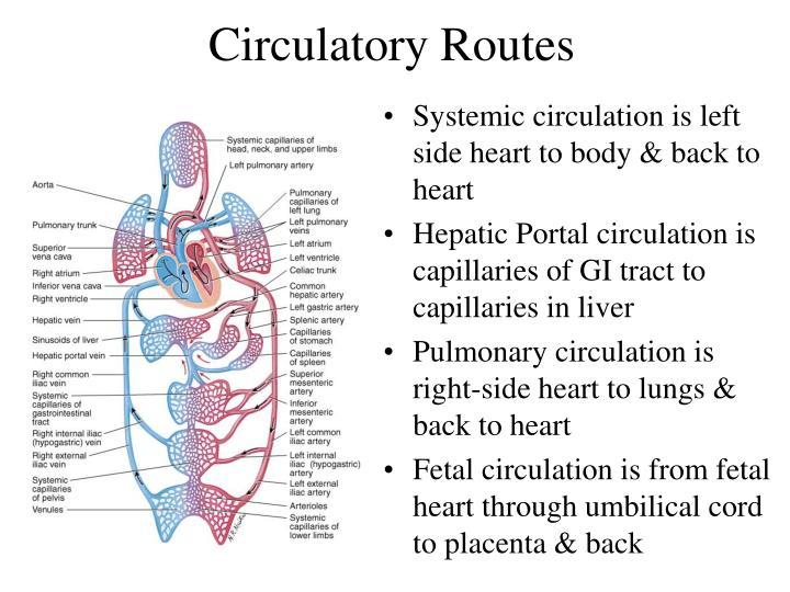 Circulatory Routes