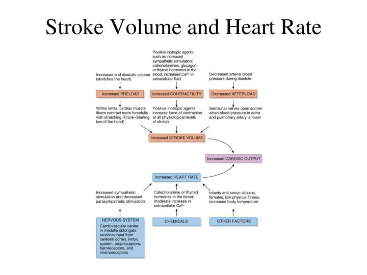 Stroke Volume and Heart Rate