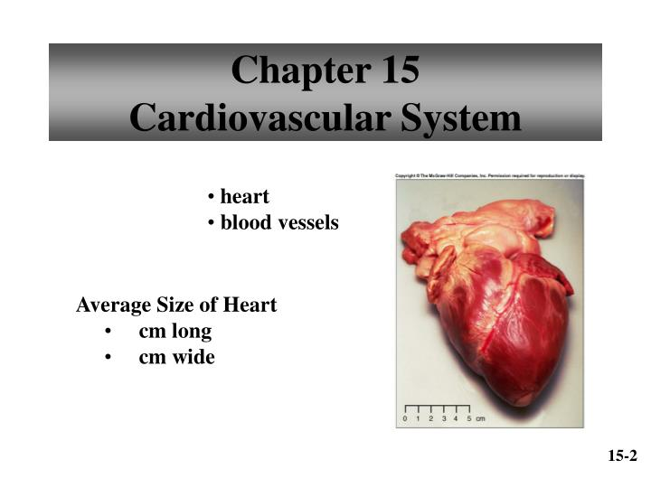 chapter 15 cardiovascular system n.