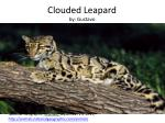 clouded leapard by gustavo