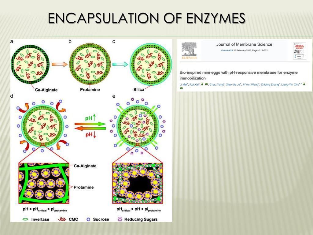 PPT - Biocatalysis PowerPoint Presentation - ID:6135174