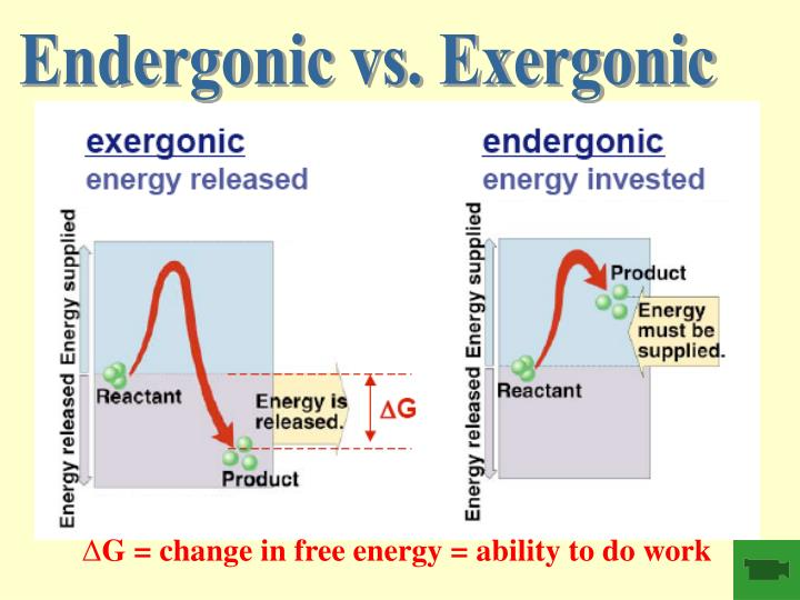 Endergonic vs. Exergonic