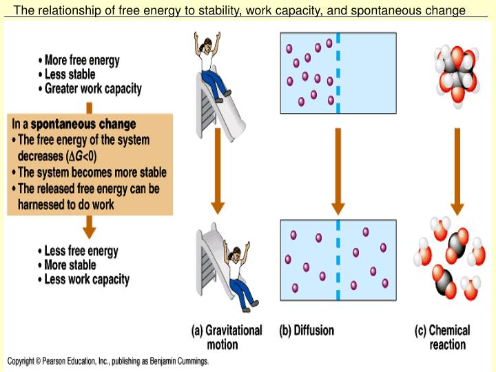 The relationship of free energy to stability, work capacity, and spontaneous change