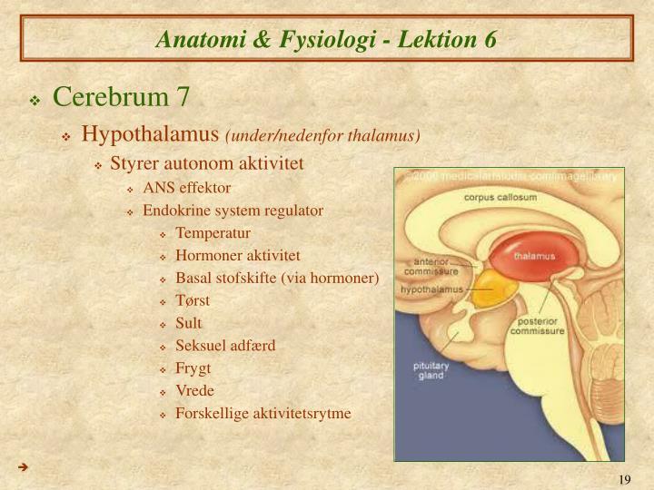 ppt anatomi fysiologi vi nervesystemet powerpoint presentation id 6136900. Black Bedroom Furniture Sets. Home Design Ideas