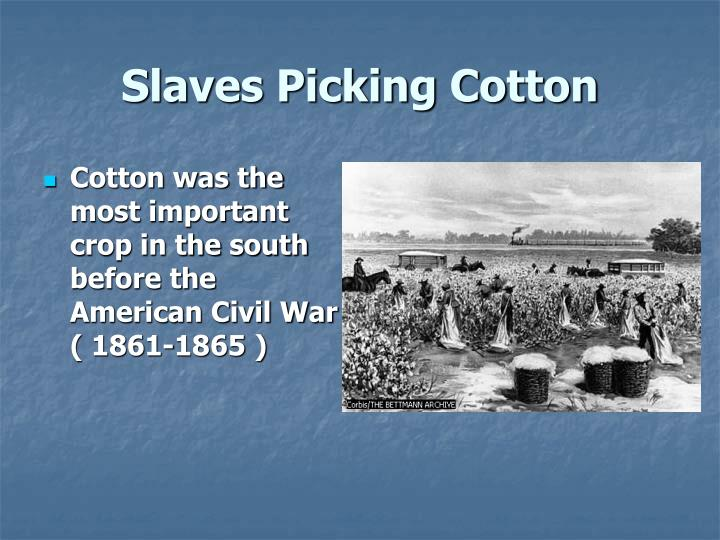 Ppt Slaves Picking Cotton Powerpoint Presentation Id