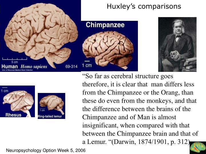Huxley's comparisons