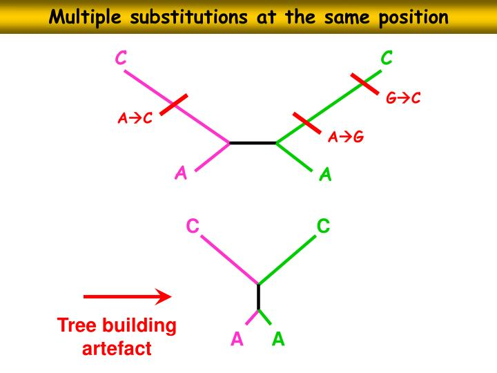 Multiple substitutions at the same position