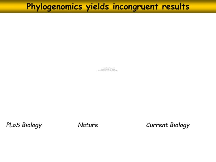 Phylogenomics yields incongruent results