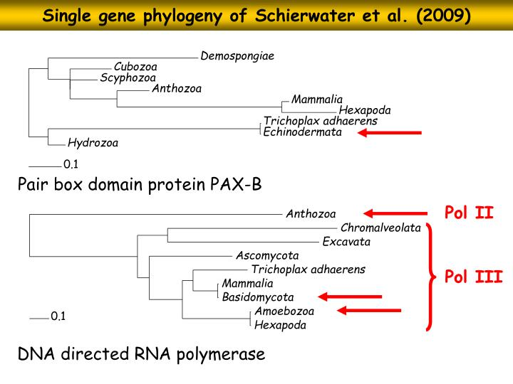 Single gene phylogeny of Schierwater et al. (2009)