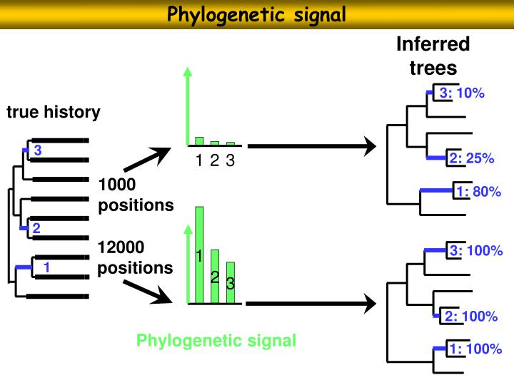 Phylogenetic signal