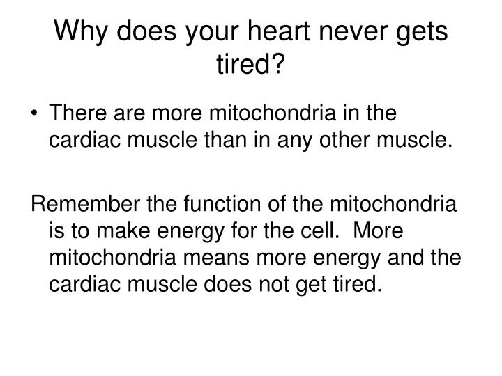 Why does your heart never gets tired?