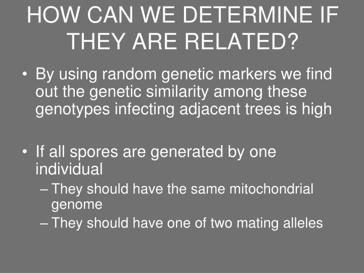 HOW CAN WE DETERMINE IF THEY ARE RELATED?