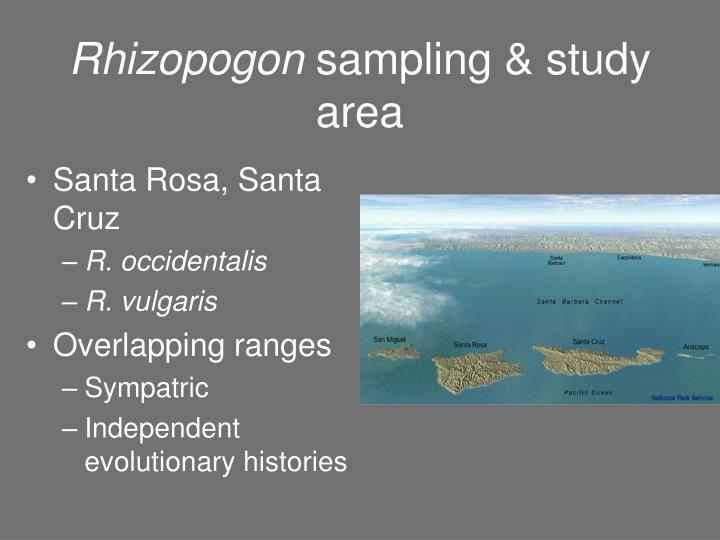 Rhizopogon